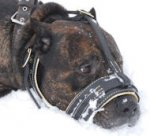 Cane corso Royal Nappa Leather Dog Muzzle