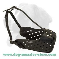 Training leather dog muzzle for medium and big dogs