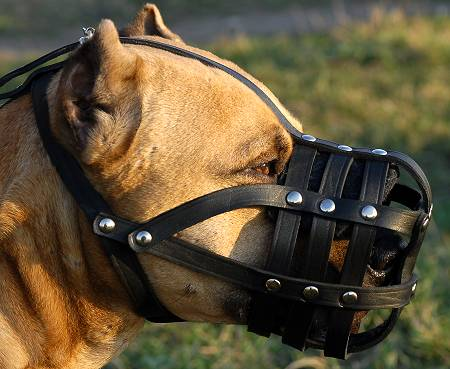 super vintilation dog muzzle for amstaff