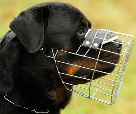 Rottweiler Wire Dog Muzzle, Rottweiler Basket Dog Muzzle -PADDED