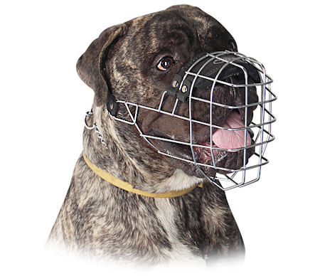 Buy today NEW Custom fit Leather Dog Muzzle for Bullmastiff