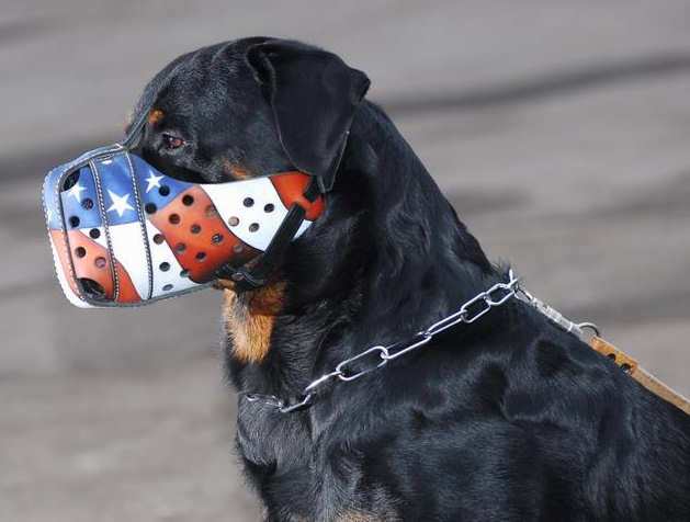 "Hand painted by our artists leather Muzzle ""Dondi"" Plus-Rottweiler"