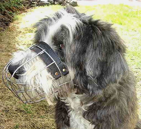 wire basket dog muzzle for Bearded Collie