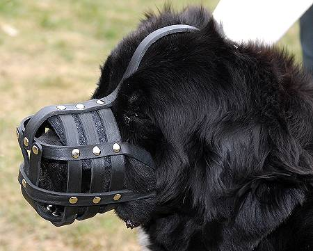 Everyday Light Weight Ventilation Newfoundland muzzle