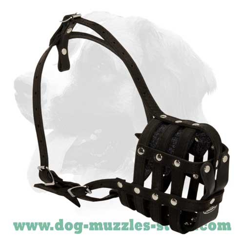 Best training dog muzzle