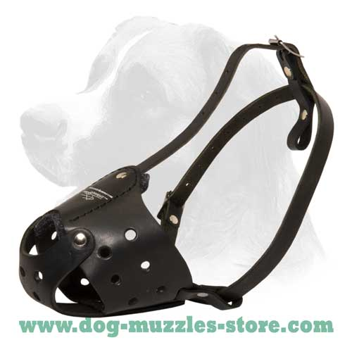Walking comfy leather dog muzzle